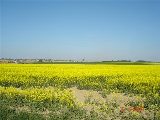 Krajobrazy oleśnickie