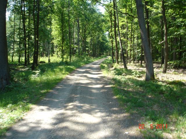 Leśne dukty w okolicach Krośnic