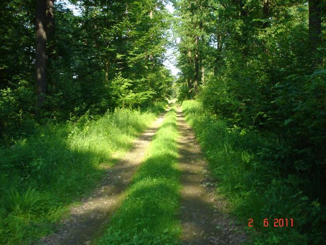 Las w okolicy Chrząstawy