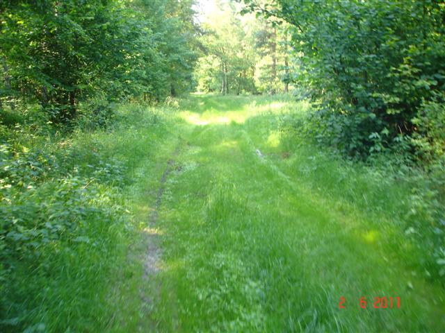 Las w okolicy Chrząstawy (2)
