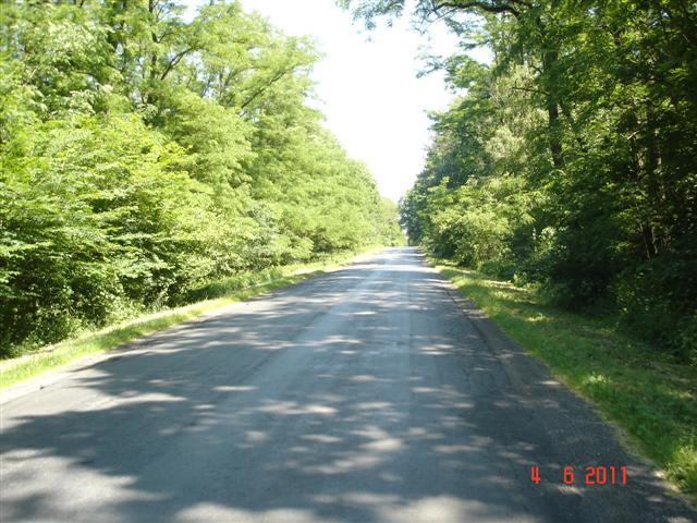 Drogi przez las w okolicach Wołowa, niestety często dziurawe :(
