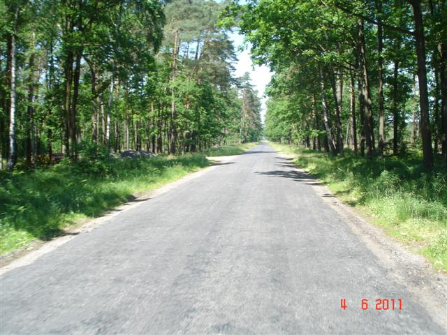 Lasy koło Wołowa