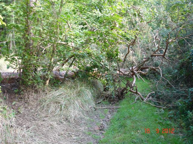 Drogi w Dolinie Baryczy, drzewo na drodze... omijamy