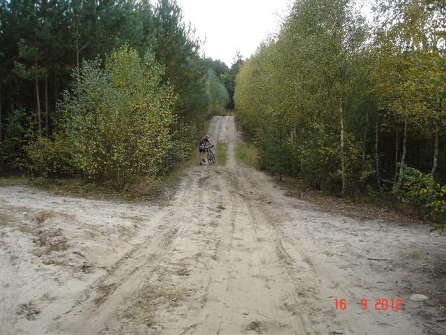 Wracamy - lasy koło Milicza