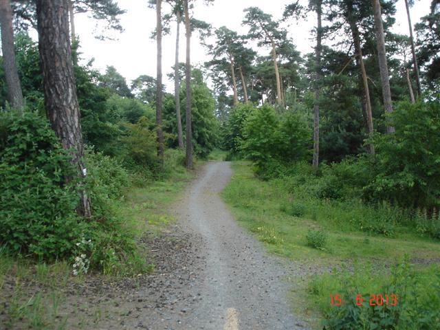 Park leśny w Ebertadt