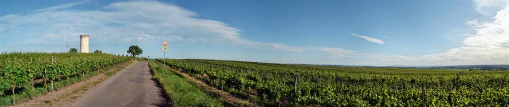 Panorama - winnice, jak okiem sięgnąć. Okolice Nierstein. Kliknij, aby wyświetlić panoramę.