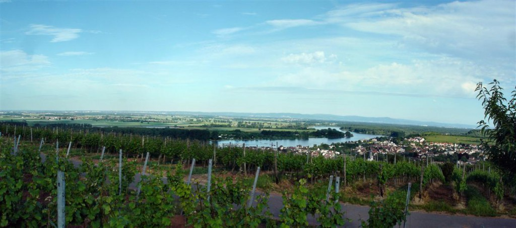 Panorama Renu z poziomu winnic ponad 200 m.n.p.m. Kliknij, aby wyświetlić panoramę.