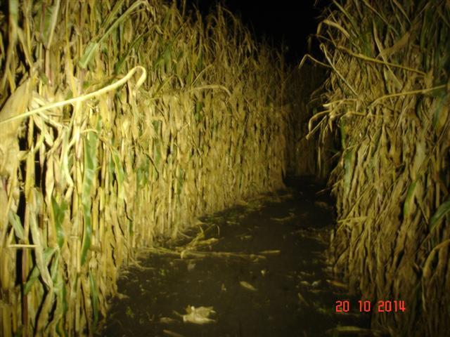 Labirynt w kukurydzy (Kobierzyce)